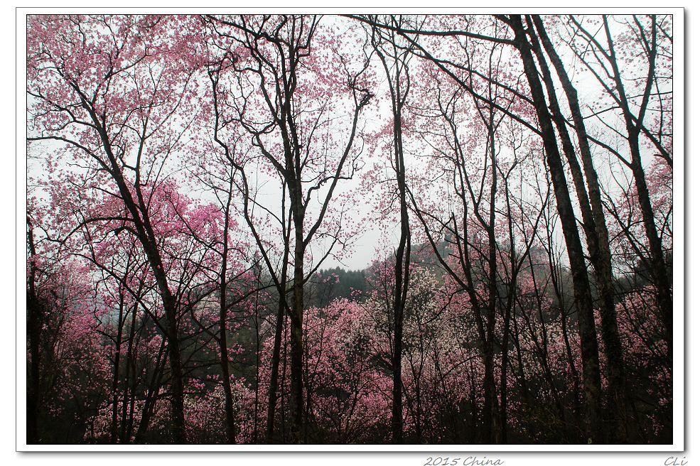 2015闲游中国12 此景只应地上有-野花烂漫的山野