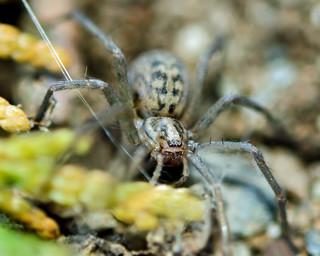 school yard spider 4334