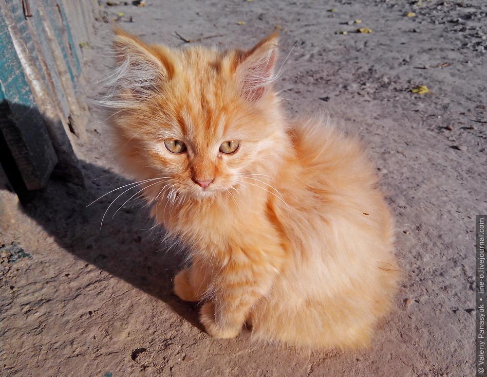 20141010_lutsk_cat_001