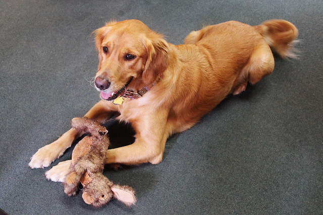 Douglas the Dog