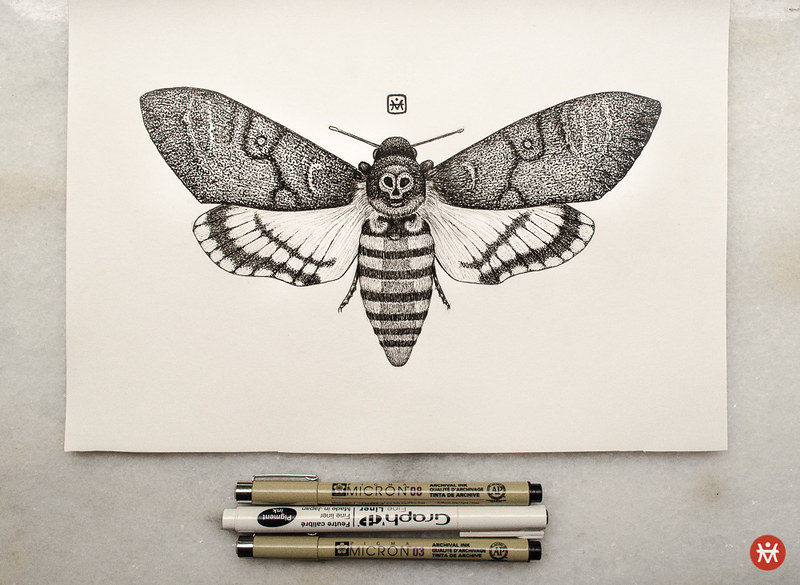 Death's-head Hawkmoth