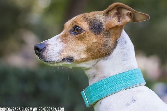 Adopt Pets Collares
