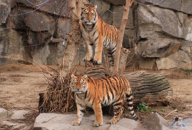Tierpark Berlin 22.11.2015   0166