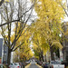 Potomac Street In the Fall