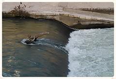 Particolare del fiume Tevere