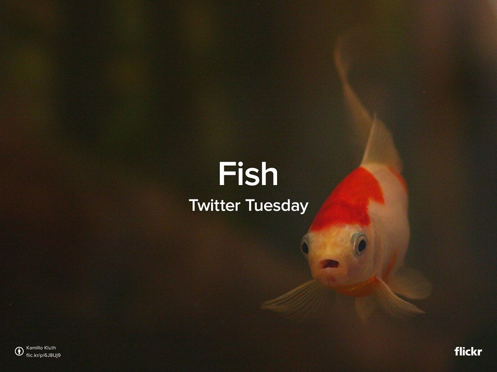 Twitter Tuesday: Fish