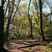 Autumn on Lewesdon Hill-2
