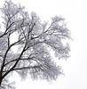 first snow-014