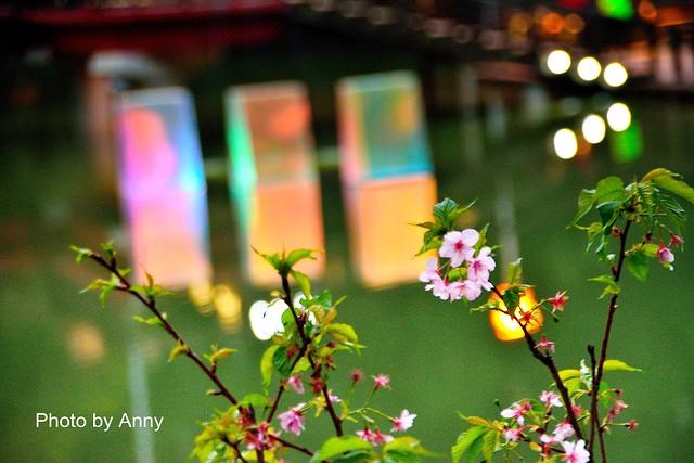 麗池櫻花79