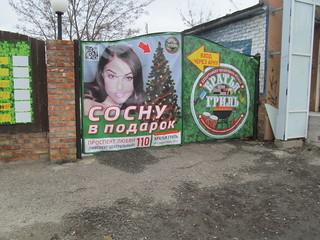 Sosnu_v_podarok 009