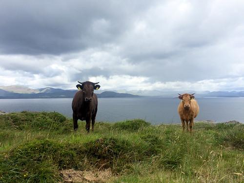 Ireland-035