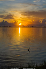 Heron and the rising sun