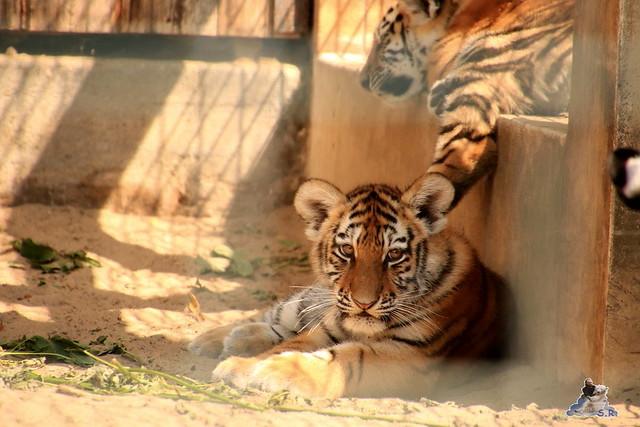 Tierpark Berlin 16.08.2015  0136
