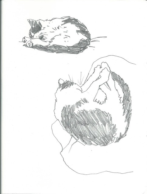 2015_09_12 Sleeping Cats 01