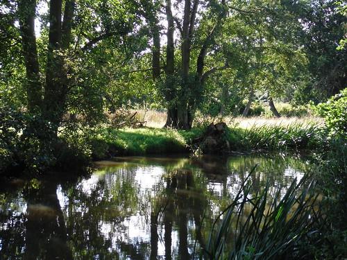 The Nadder River near Tisbury Mill