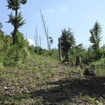 Vegetation regrowth on covered roads I