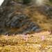 Delicate purple flowers by fnacholeon
