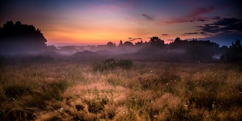 Misty night II