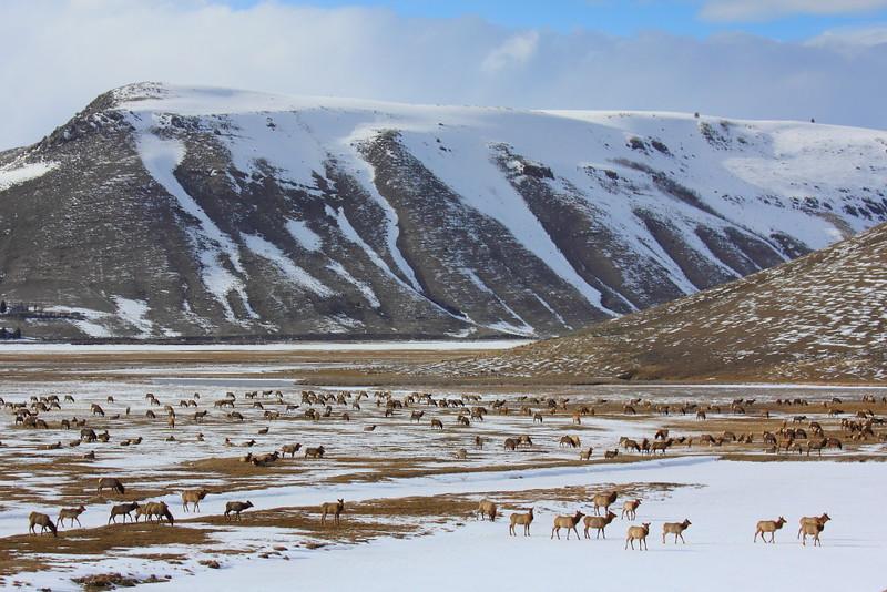 IMG_8173 National Elk Refuge