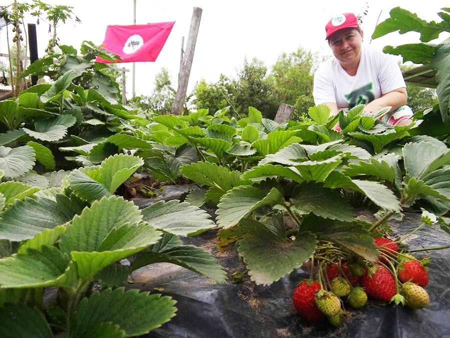 Ana Gisel Borba trabalha com horta orgânica há 10 anos, desde o seu primeiro ano de assentada.jpg