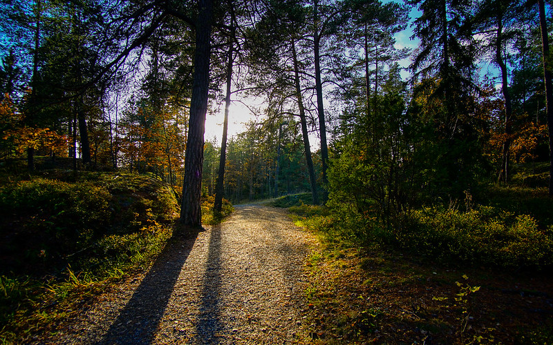 Autumn in Tyresta