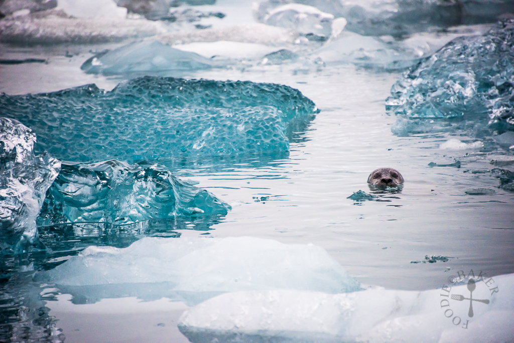 Seals at Glacier Lagoon