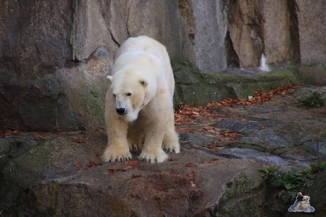 Zoo Berlin 08.11.2015  032