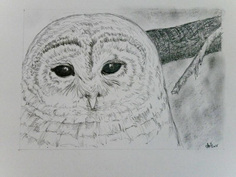 2015 Mal's Barred Owl