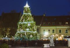 Kaunas Christmas Tree 2015 #333/365
