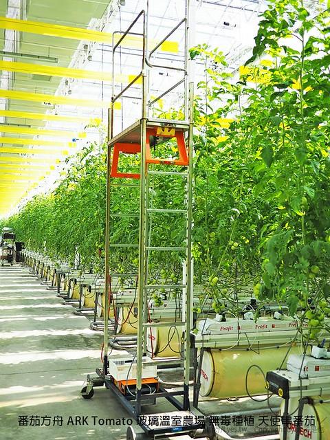 番茄方舟 ARK Tomato 玻璃溫室農場 無毒種植 天使串番茄 46