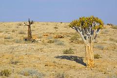 DSC07632 - NAMIBIA 2013