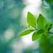 Zen Green by icemanphotos
