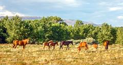 McCarran Ranch Preserve - The Nature Conservancy