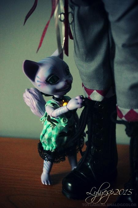 [ Shin - KDF Bory ] Cheshire chaton ? (23/12/2018) 20956250433_6cca1788fa_o