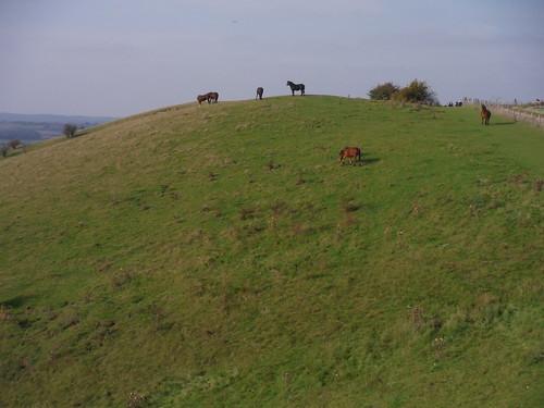 Horses in Barton Hills