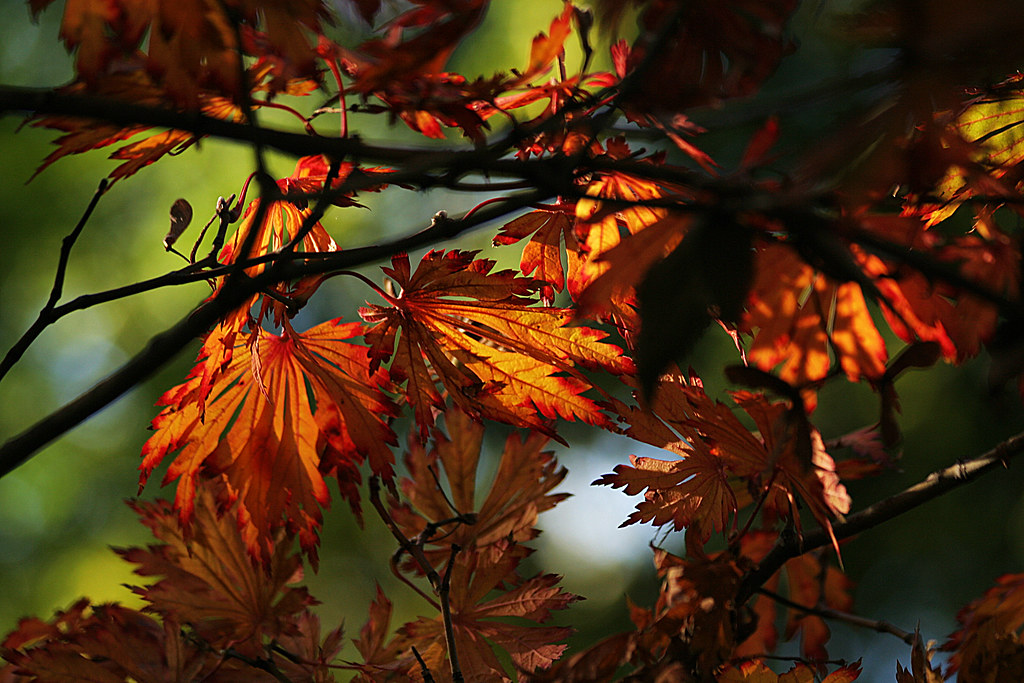 Los colores del RJBM durante las tarde de octubre