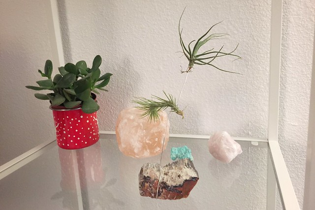 Air Plant Holder Made of Petrified Wood