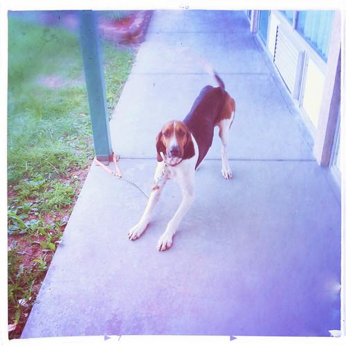 dog illinois hound motel salem hipstamatic chivaslens bigeasyfilm