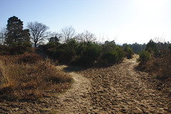 Wahner Heide 02