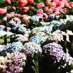 """""""Flores e espinhos são belezas que se dão juntas. Não queira uma só, elas não sabem viver sozinhas""""   * Padre Fábio de Melo #BlogAuroradeCinemaregistra #flores #PadreFábio #natureza #padrefábiodemello #reflexāo"""