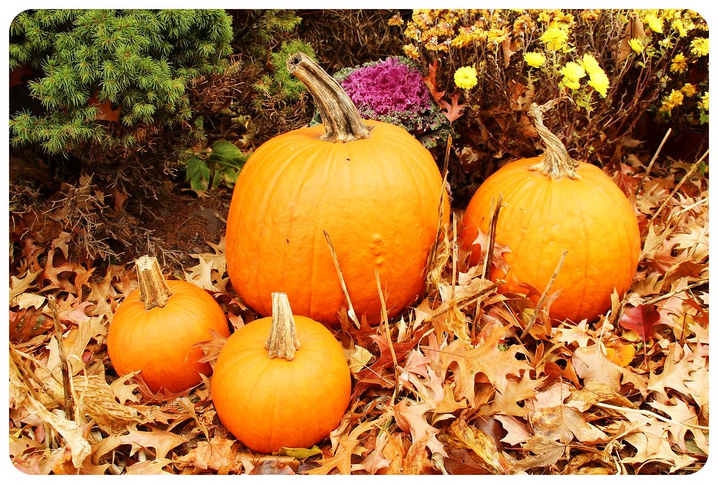 tannersville new york pumpkins