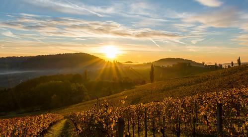 autumn art sunrise landscape nikon herbst sigma vineyards landschaft sonnenaufgang 1835 2015 weinberge südsteiermark weinstrasse hsm d7100 southstyria