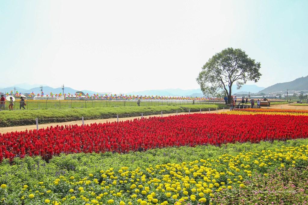 新社花海 (47)