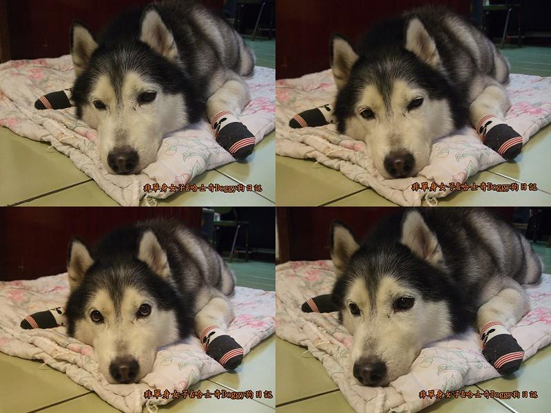 Doggy穿兒童襪09