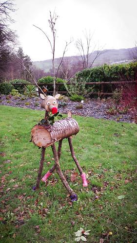 Unexpected reindeer