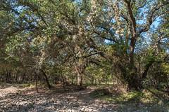 Forest - O.P. Schnabel Park - San Antonio - Texas - 18 September 2017