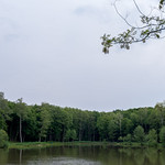Forest lake, May 2012.
