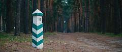 Лесная дорога / Forest road
