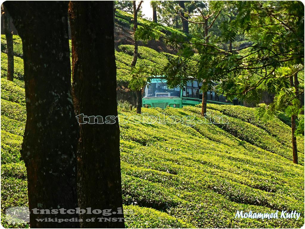 Theni - Munnar Bus