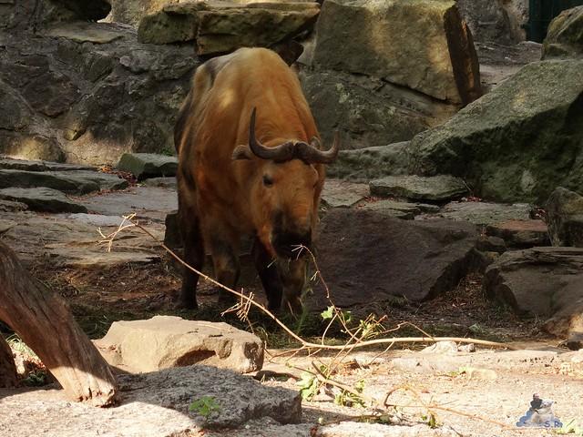 Zoo Berlin 26.08.2015  013